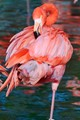 Relaxing Flamingo Style