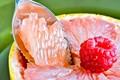 serated grapefruit spoon