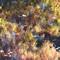 Autumn Pond Reflections 1600