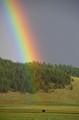 Rainbow Buffalo