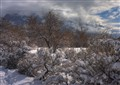Winter Wasatch