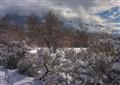 Winter Wasatch