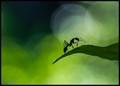 Ant Dance