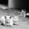 Three little evilly-cute cats