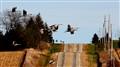 Sandhill Cranes in Wisconsin