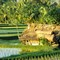 Cabin in rice fields at Bali