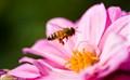 bee in flight 2715-2715