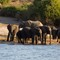 Elephants_9797