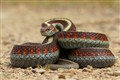 Snake's Eye View