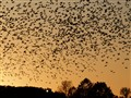 Sunset Swarm