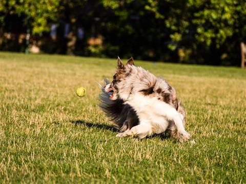 running dog-041