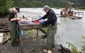 Taking salmon with a fishwheel, Chitina River, Alaska