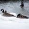 Frozen Geese (DPRS)