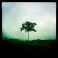 arbre cadre noir