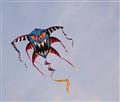 Ferocious Kite
