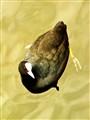 Water bird