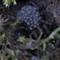spider.w.babies.crop.2