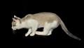 Khaki Kitty Stalking