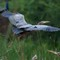 Purple Heron (Ardea purpurea)