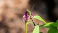 green dfly