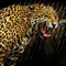 UNHAPPY CAMPER Jaguar challenge _3290846