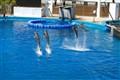 Dolphins in Valencia sea park