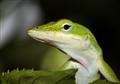 Curious Green