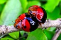 Lady bug's love