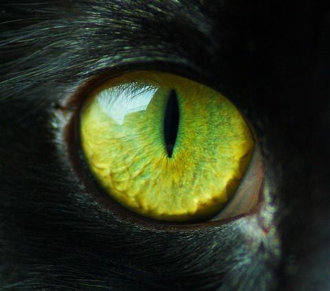 Cat S Eye Photography
