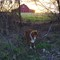 K3_dog_pond_sunset