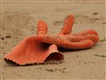 Rubber glove in the sand