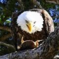 Eagle dining al fresco