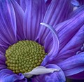 floral_hdr