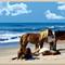 wild horses_1