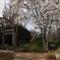 NC State University Arboretum