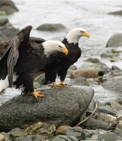 Eagledrop2 016