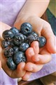 blueberries_5143