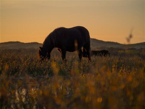 Paard bij ondergaande zon closeup kl