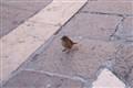 feeding bird...