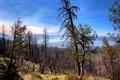 Yosemite_View