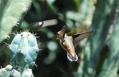 Flying Caerfully