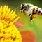 Bee&Flower