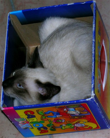 box_enh