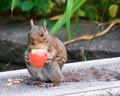 Enjoying an apple