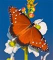 butterfly_3936