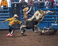 Rodeo Bull 3058