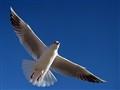 Embracing The Sky