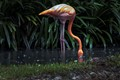 Pink-Orange Flamingo