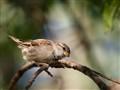 Sparrow2012
