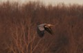 In SE Michigan during this time of year Blue herons spend hours building their nests. Its like watching planes take off and land at an airport. The action never stops all morning long.